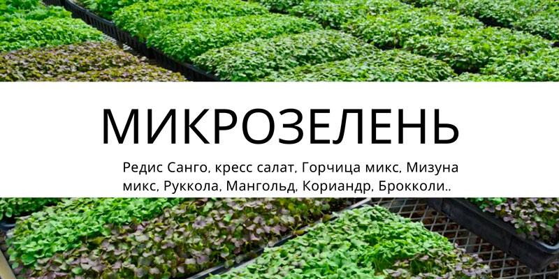 Купить Микрозелень