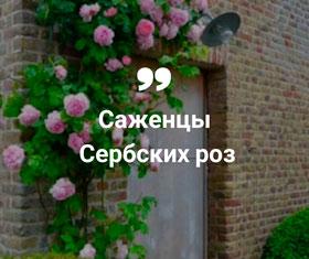Купить сербские розы