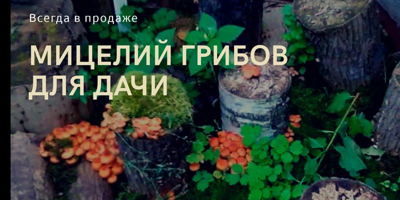 Купить мицелий грибов